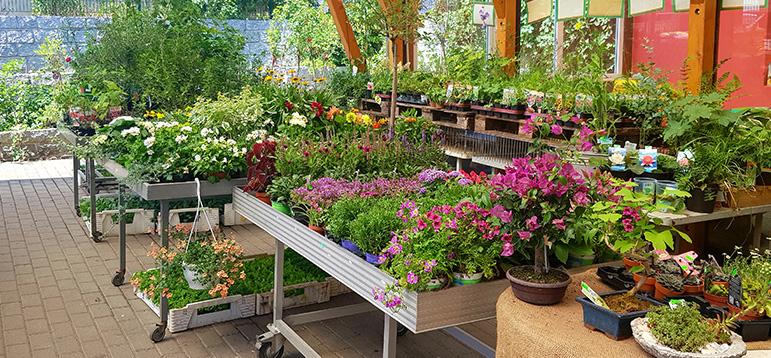 Gartenmarkt Pflanzenschutz Kompostierung Und Containerdienst